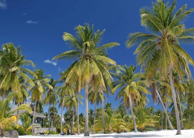 Isla Saona is one of the most famous excursions in the Dominican Republic